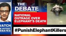 National outrage over elephant's death