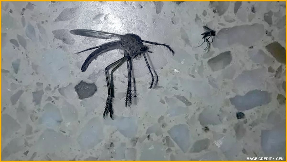 Man posts the picture of mosquito