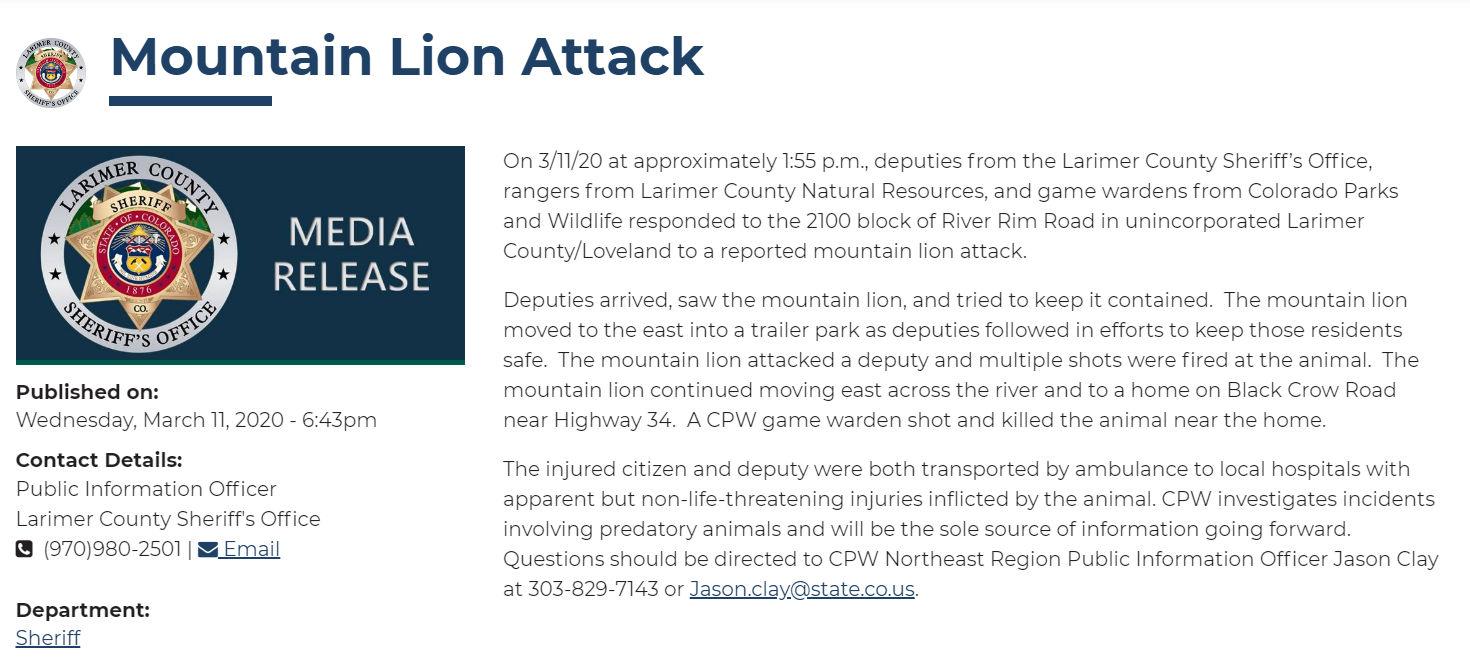 mountain lion attacks, colorado deputy attacked, mountain lion attacks deputy