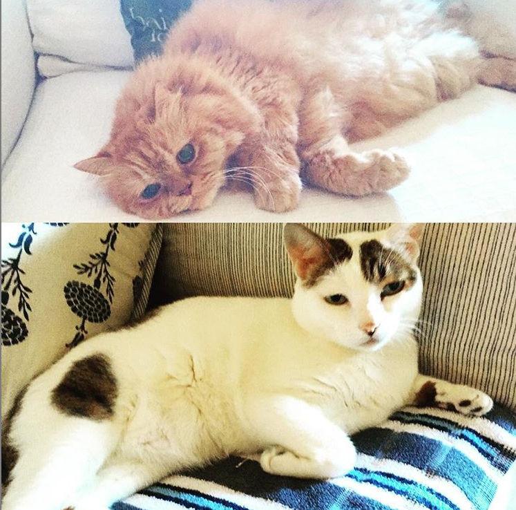 Alia Bhatt's photos Alia Bhatt,Alia Bhatt's photos Alia Bhatt's cats Mr Edward,Alia Bhatt's photos Alia Bhatt's cats Mr Edward's cats Mr Edward