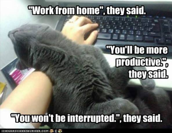 Work from home expectation vs reality memes new internet favourite ...