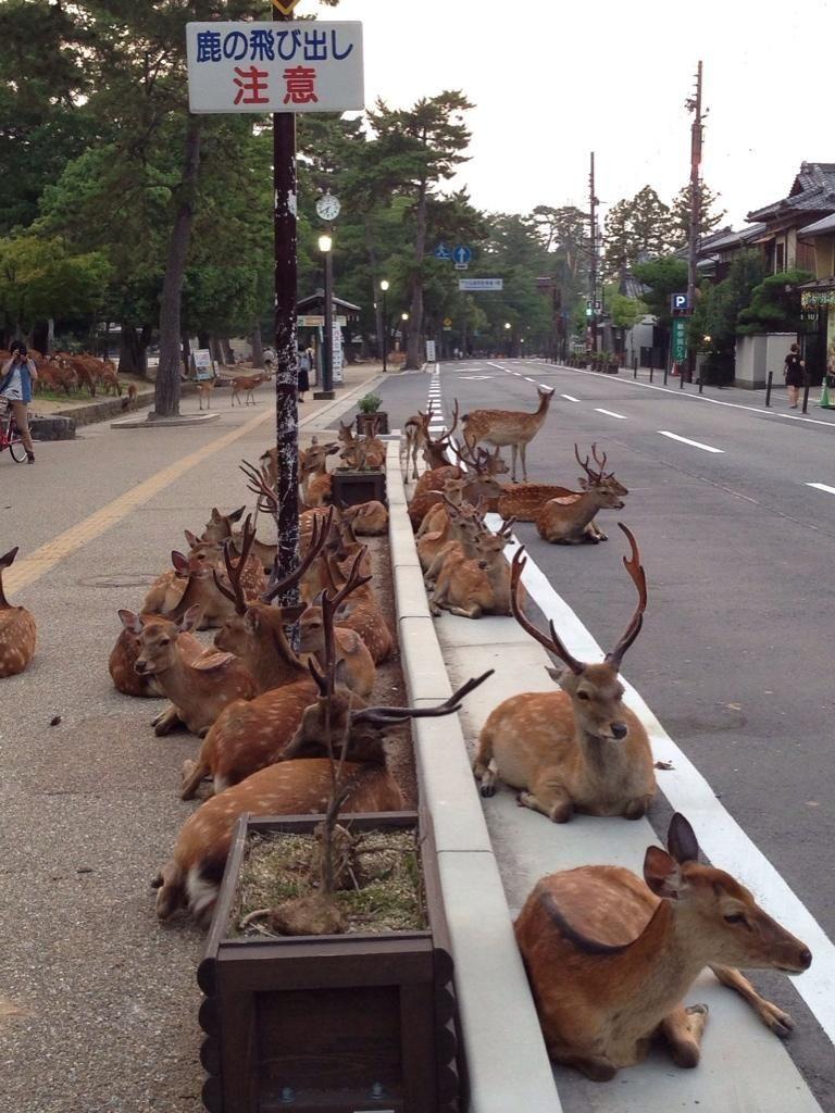 Fact Check Herd Of Deer On Ooty Road