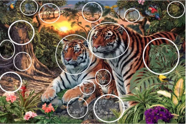 How Many Tigers in This Picture?