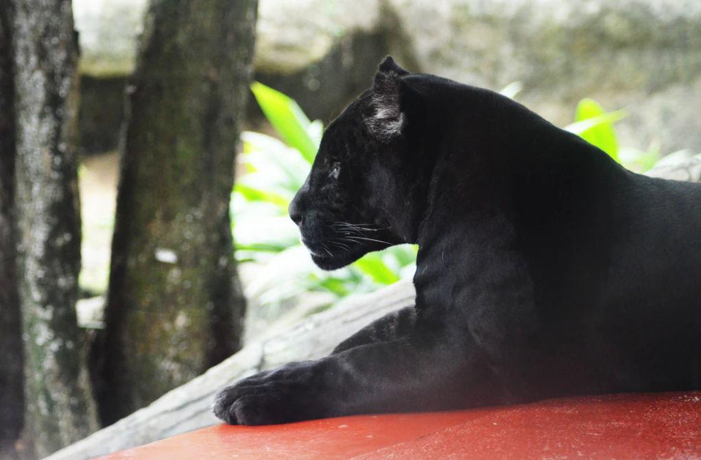Un homme Black Panther trouvé à Goa au Royaume-Uni vole un vélo de police Un homme brésilien découvre qu'il a des nouvelles supplémentaires sur le virus du rein de la semaine Black Panther trouvé à Goa au Royaume-Uni un homme vole un vélo de police Un homme brésilien découvre qu'il a des nouvelles supplémentaires sur le virus du rein