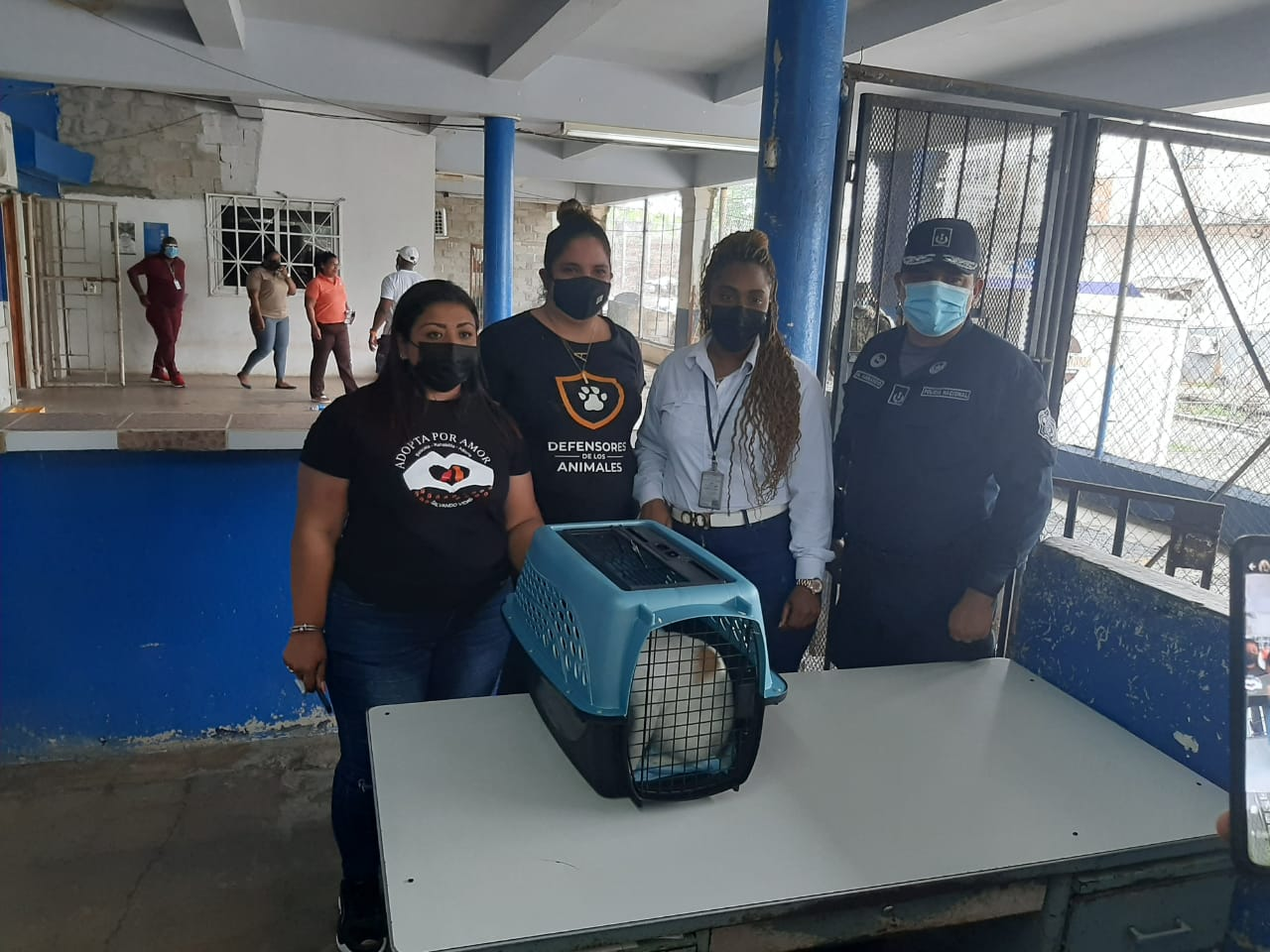 Cat caught smuggling drugs inside Panama Prison, triggers probe