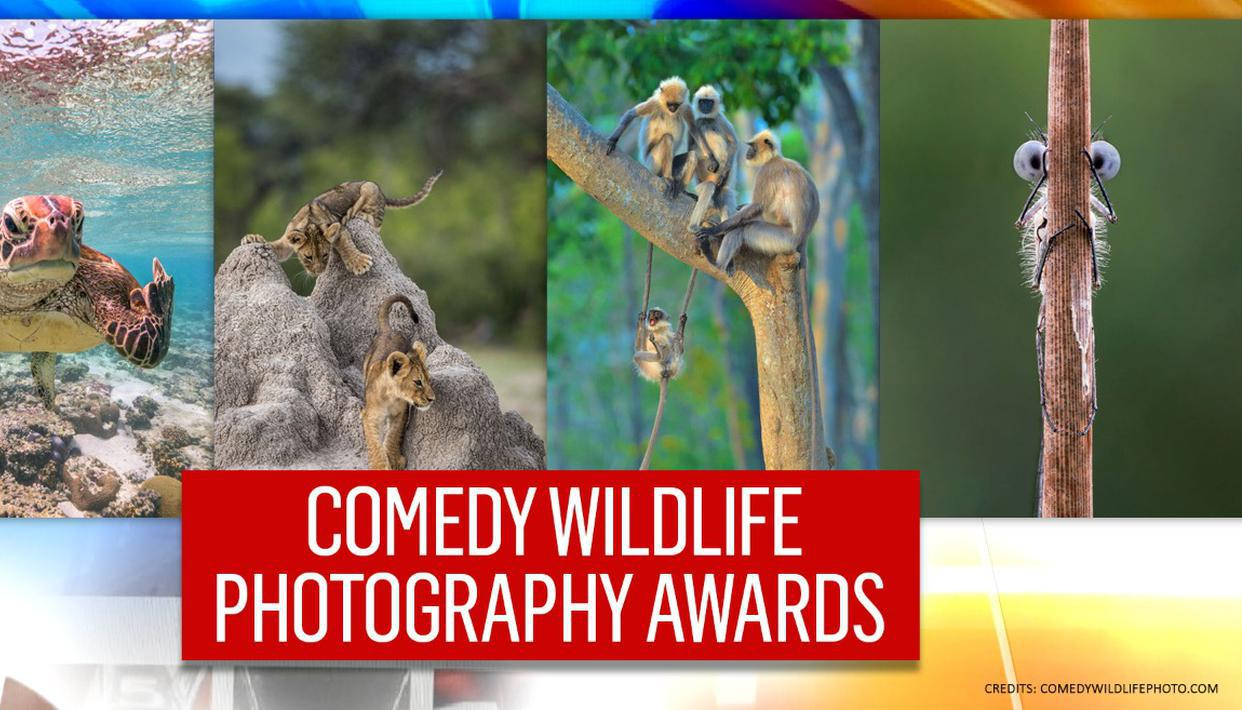 IN PICS | From 'singing' squirrel to 'racing' monkeys, check best comedy wildlife photos