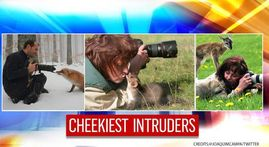 IN PICS: From cute critters to a cheeky cheetah, wildlife photobombers will make your day