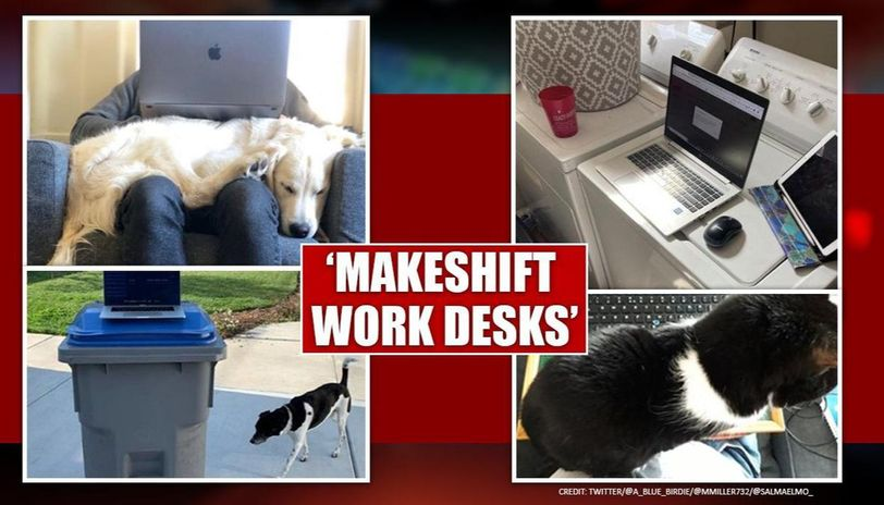 Covid 19 People Create Funny Makeshift Desks After Work From Home Advisory