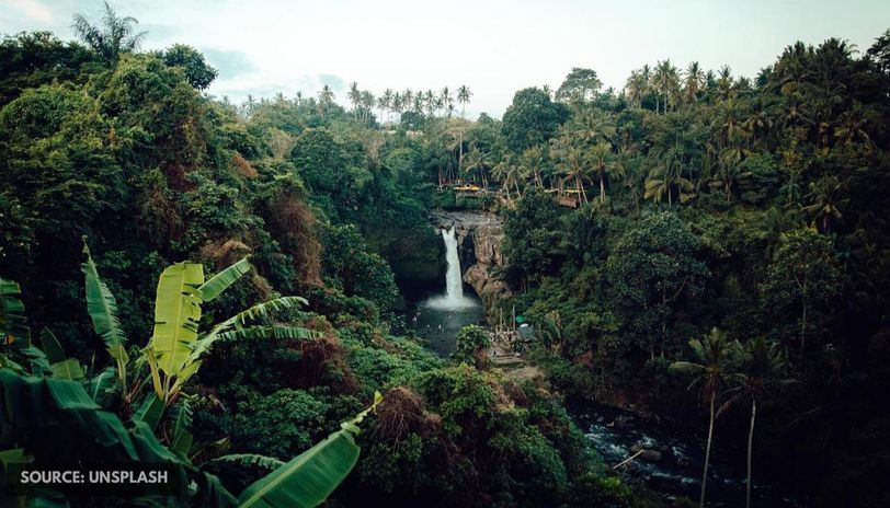 what is World rainforest day