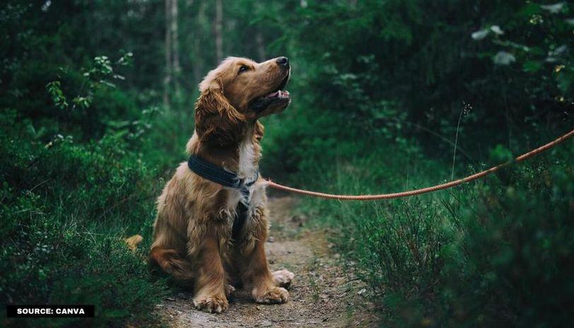 international guide dog day