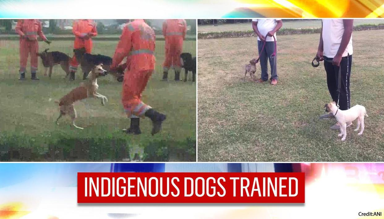 NDRF inducts 3 indigenous breed dogs; pledges to train more under 'vocal for local'