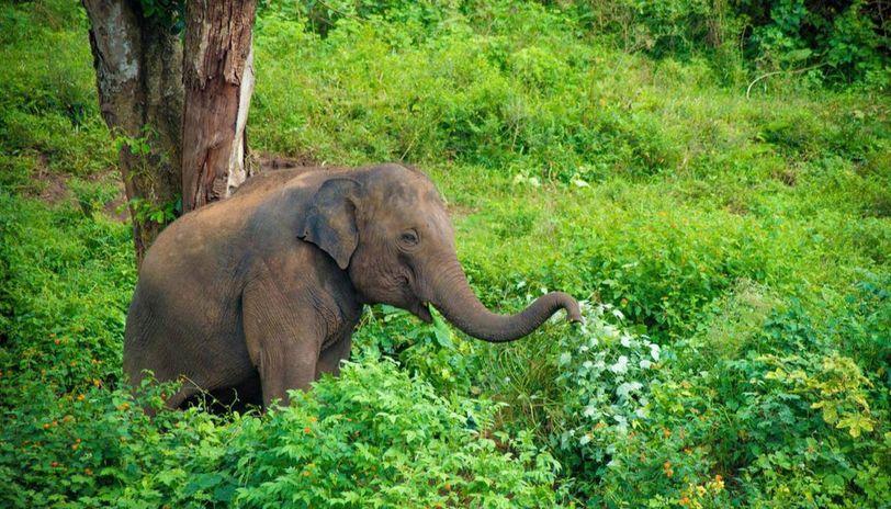 No elephant safari in Dudhwa National Park this season