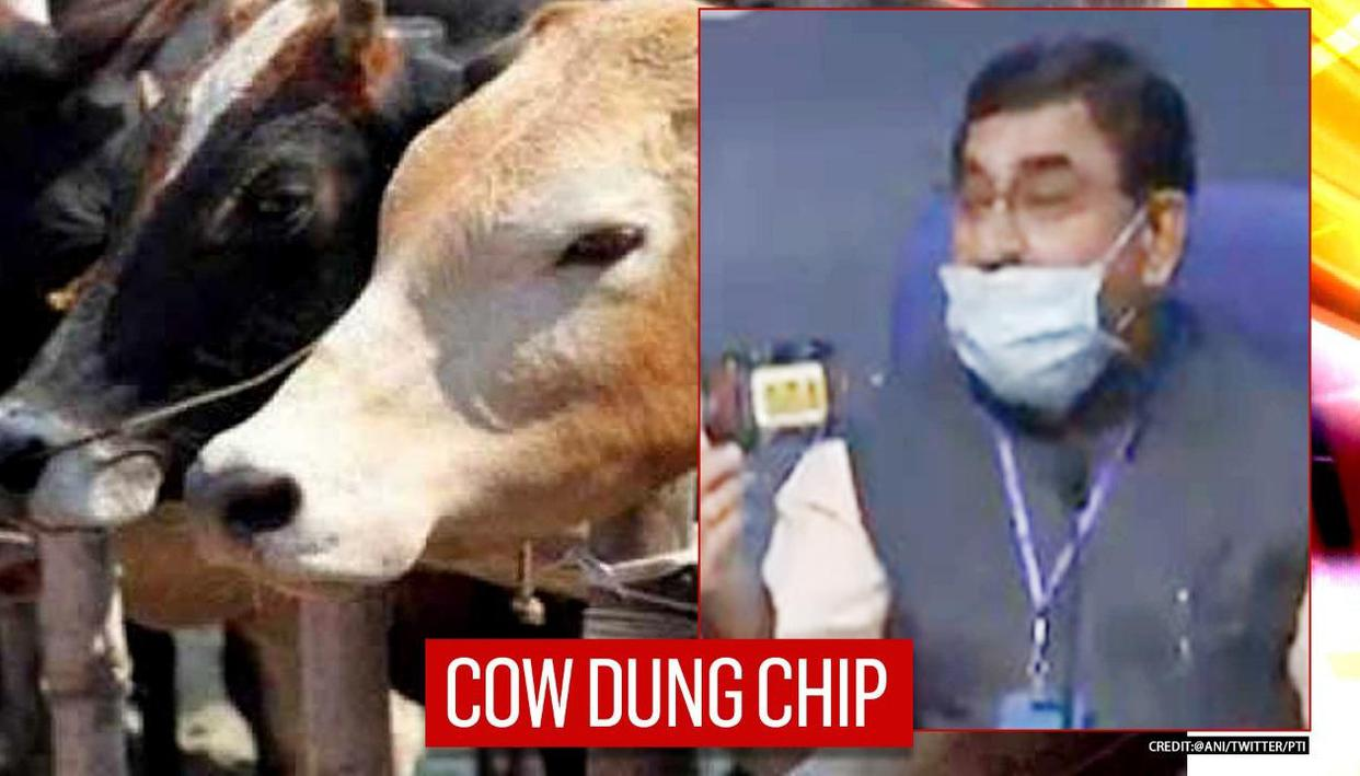 Cow dung will protect all': New Cow-dung chip to fight radiation unveiled by central dept - Republic World