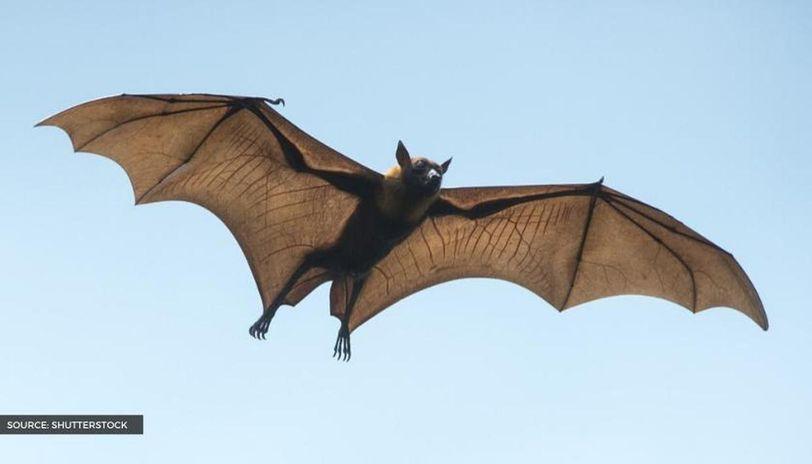 what is international bat appreciation day