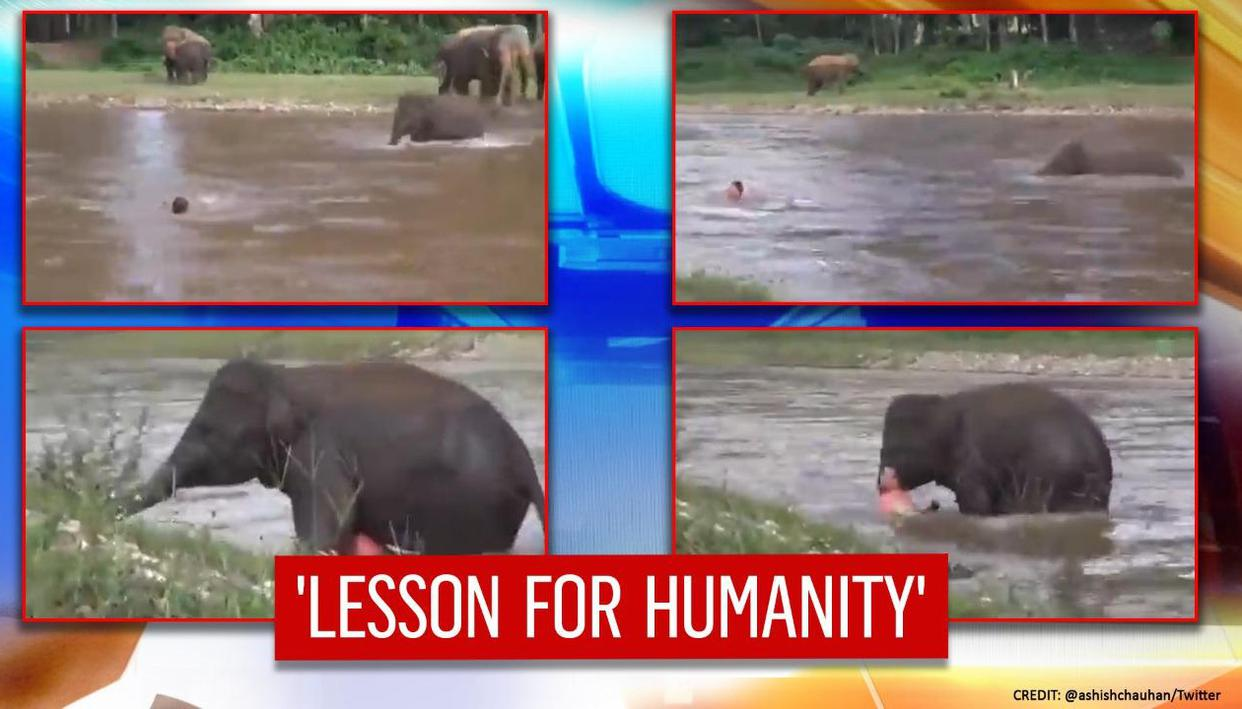 Baby elephant fights flowing water to save man from drowning, watch the adorable video