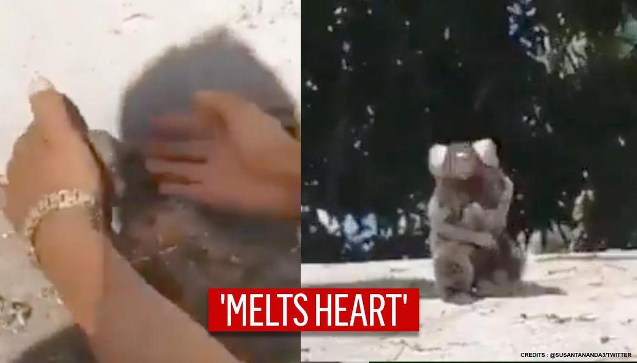 Lion Tamarian reunited with mama by good samaritan, netizens adore 'look of gratitude'
