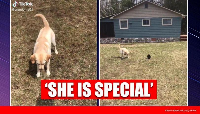 Joyful dog tries to catch shadow instead of frisbee, netizens relate