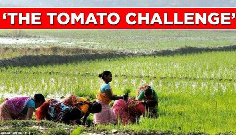 Tomato challenge