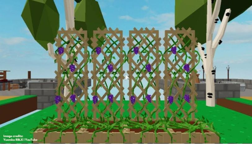 How To Plant Grapes In Roblox Skyblock And Start Earning Coins