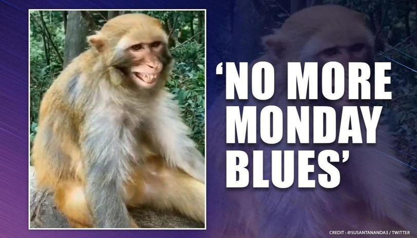'Monday will be no different than Sunday':Video of 'happy monkey' is relatable amid COVID-