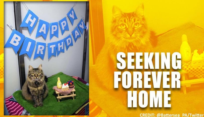Lonely Cat Looking For A Forever Home After No One Shows Up To Her Birthday Party Republic World