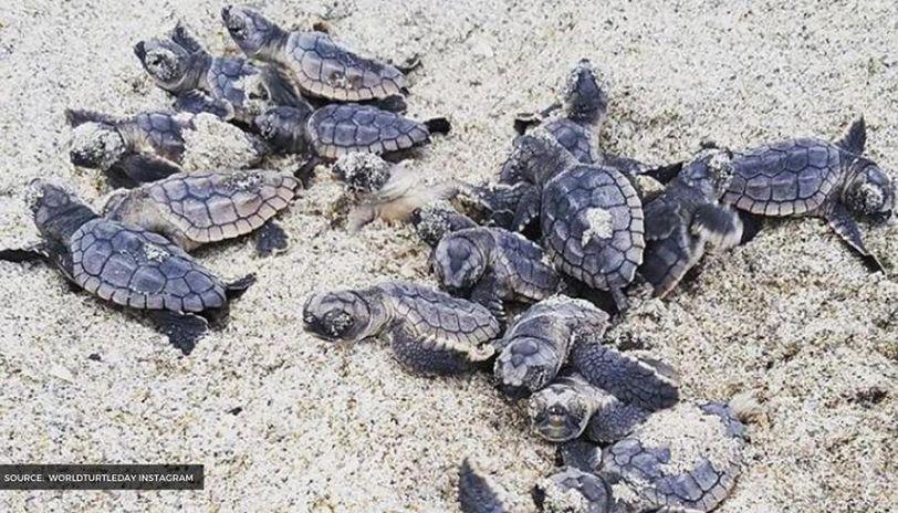 world turtle day theme