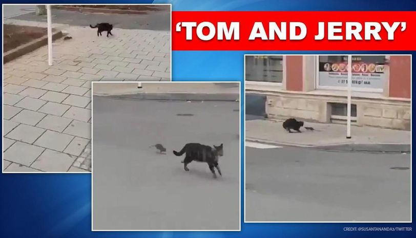 Cat runs on being chased by a rat, maintains social distance: watch