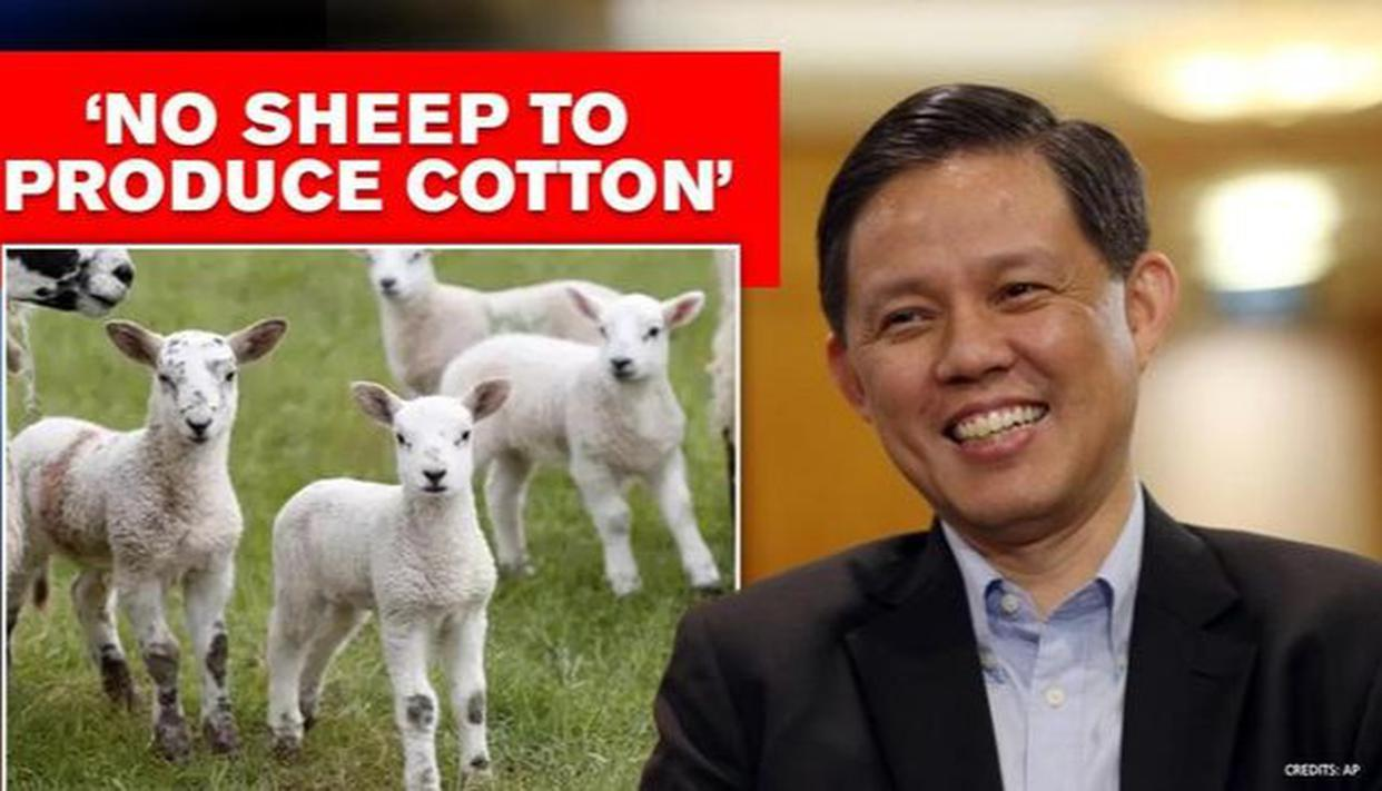 Singapore minister says 'not enough sheep to produce cotton', netizens start schooling him - Republic World
