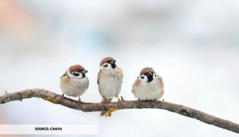 what is world sparrow day