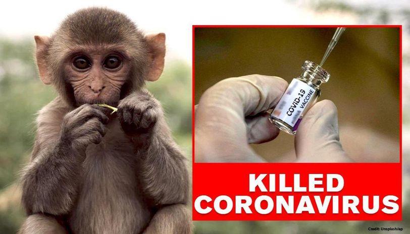 COVID-19: Study proves Moderna's coronavirus vaccine worked in monkeys
