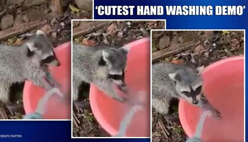 Coronavirus: Animals giving the cutest hand washing demo are now social media stars