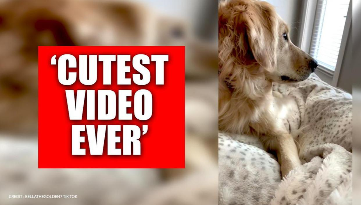 This video might explain what dogs think while following their owners around; Watch - Republic World