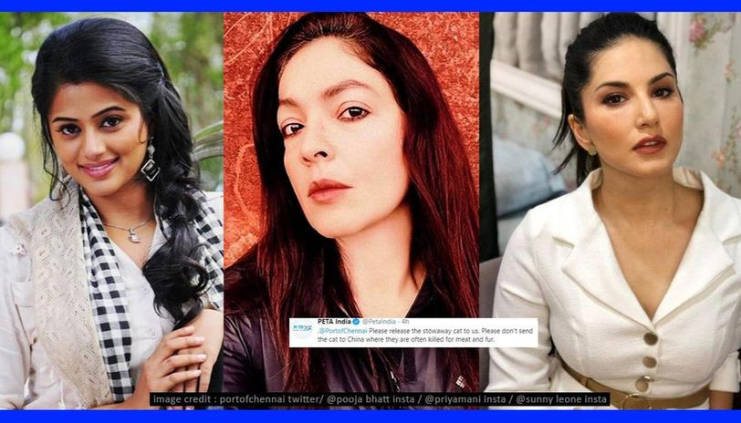 Pooja Bhatt, Priyamani, others react as cat faces deportation to China amid COVID-19 scare