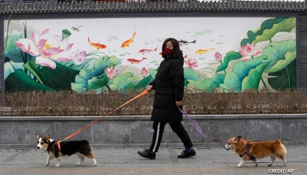 Coronavirus confirmed in Hong Kong pet dog