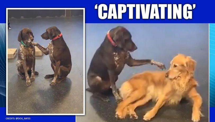 Dog fondly petting other doggos breaks the internet, melts netizens hearts