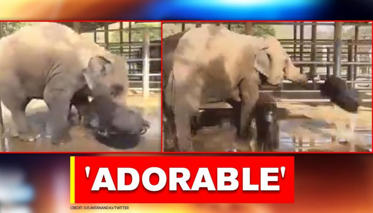 Mother elephant gets angry on its baby for playing in water for too long; Watch - Republic World