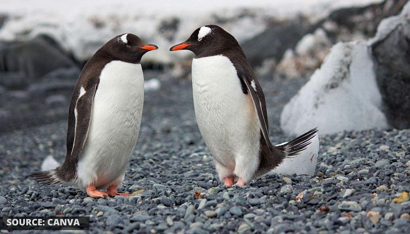 what is world penguin day