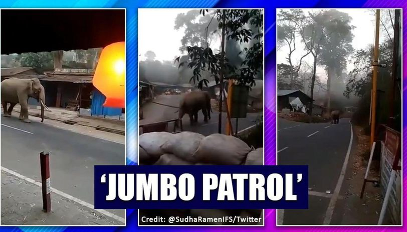 Video of Tusker patrolling the streets