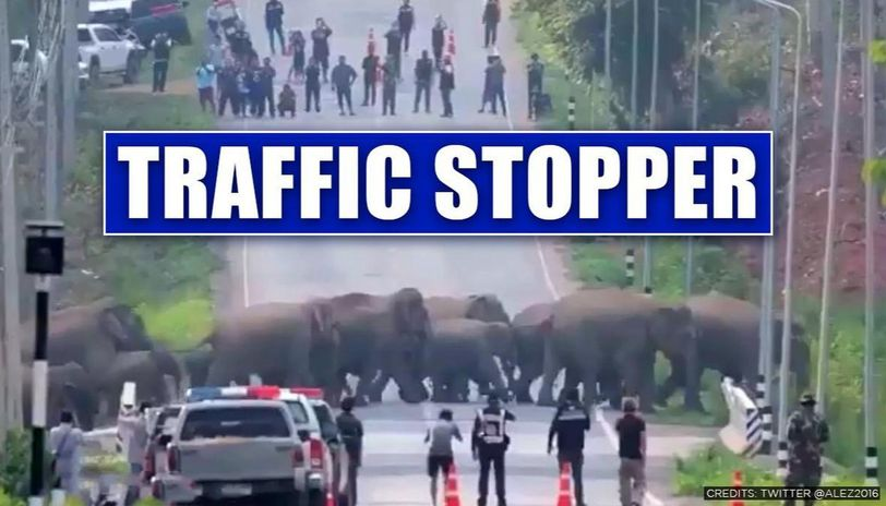 Thailand: Herd of elephants cross highway, traffic stops to watch the 'amazing sight'