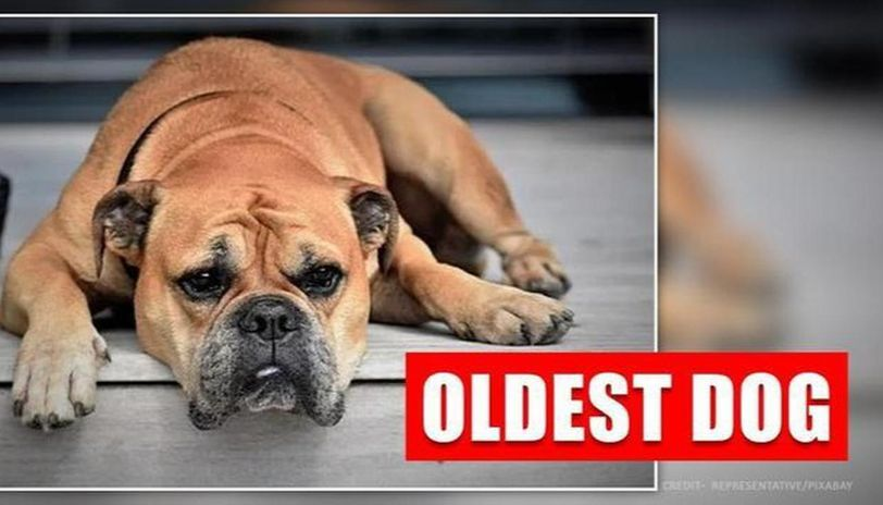 UK's Queenie, the oldest dog going strong and healthy at the age of 21