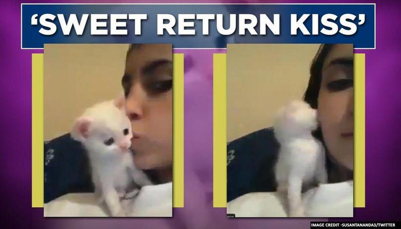 Video of kitten kissing back its owner leaves netizens praising animal-human bond