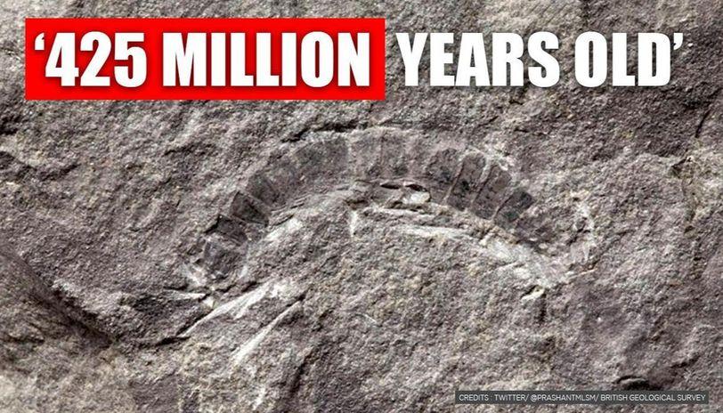 Millipede Fossil