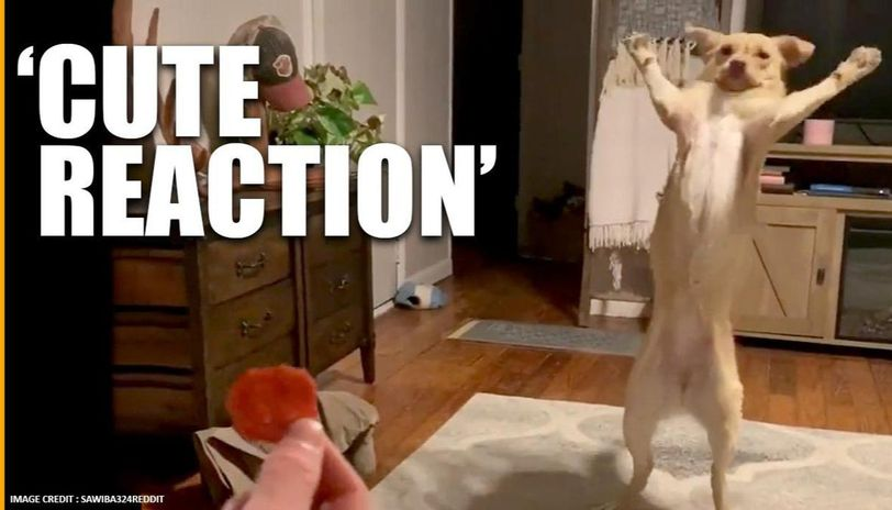 Dog's reaction on getting a treat is winning hearts of netizens. Watch