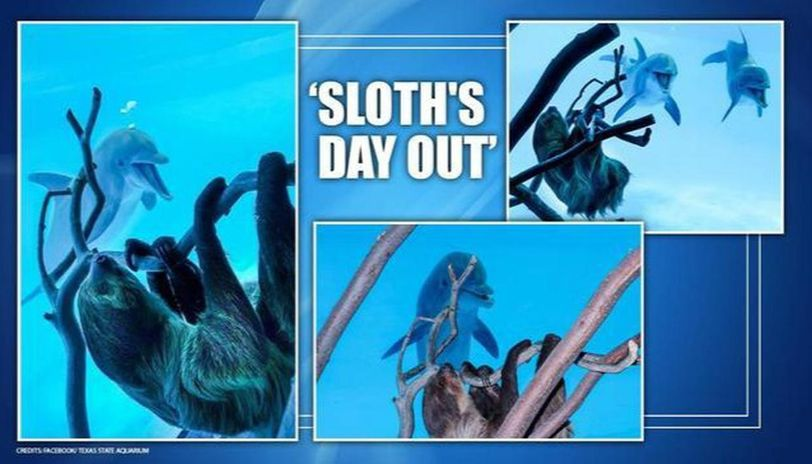 Sloth explore Texas State Aquarium and meets dolphins as it remains shut for visitors