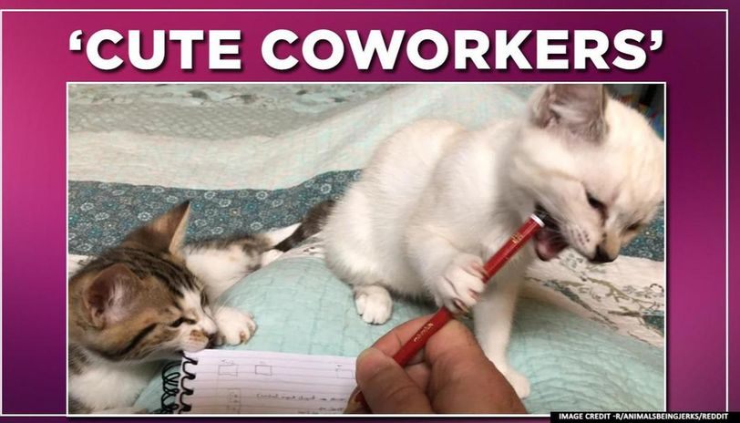 COVID-19 lockdown: Cute yet infuriating cat coworkers thrill owner working from home amid