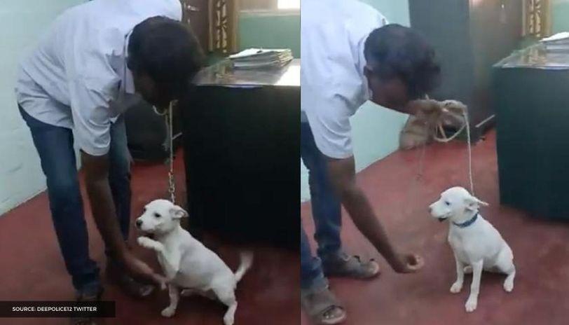 Indie Pup pooja