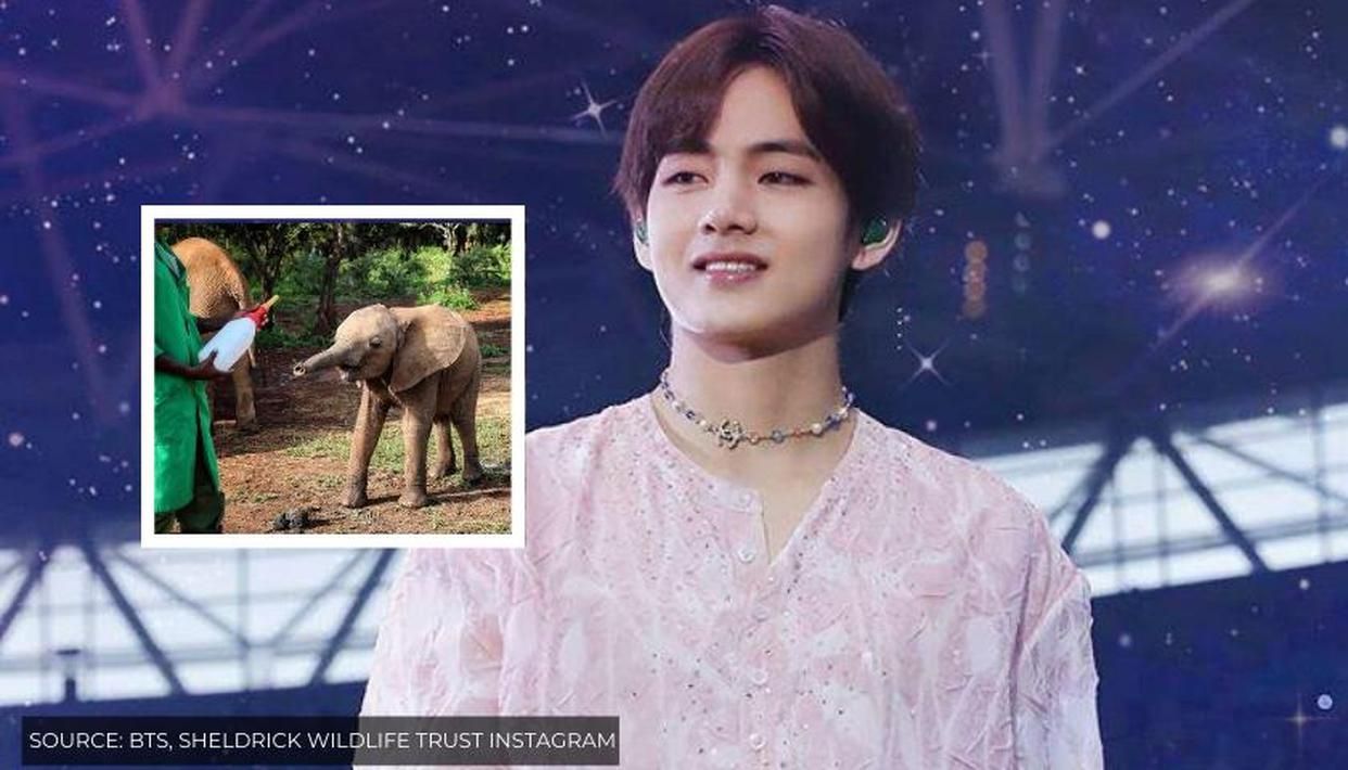 Baby Elephant adopted in BTS' V's name by Taehyung Africa fanclub 'is thriving' - Republic World