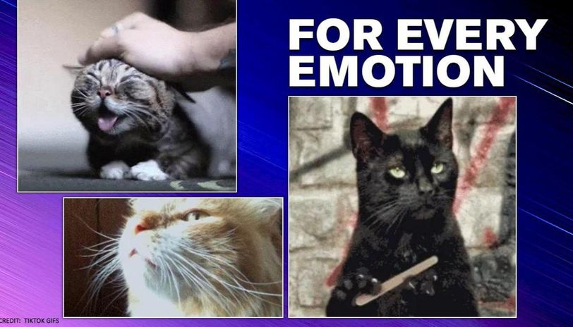 US Scientists identify 27 categories of emotions and there is a cat for each