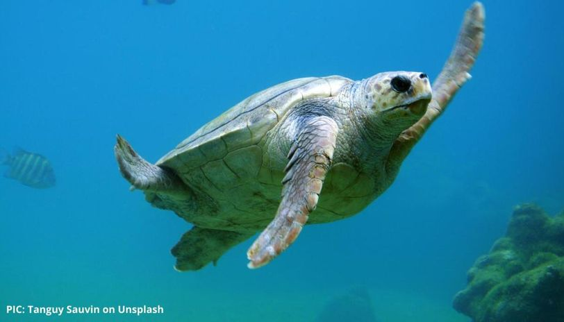 what is world turtle day
