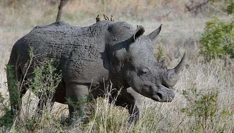 Rhinos and captive elephants vaccinated for anthrax